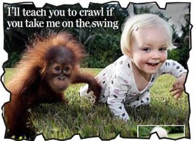 """可爱小女孩和可爱小猩猩的""""成长""""友情"""
