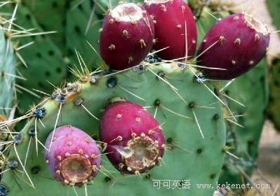 毒橡和其他有毒植物的样子