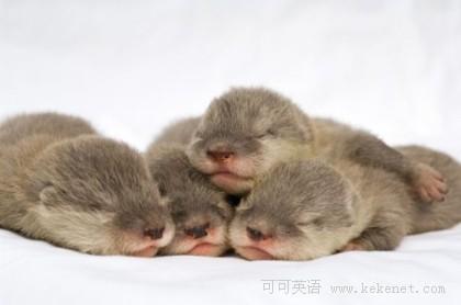 趣味图片集锦:很萌很萌的动物宝宝们