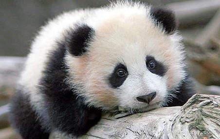 人与自然:精选10张可爱的动物照片