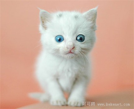 开心图集 可爱小猫的卖萌表情 双语组图图片