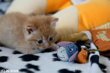 开心图集:可爱小猫的卖萌表情(双语组图)