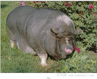 美甲动物猪手绘图片