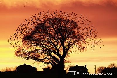 英国2011年野生动物摄影比赛获奖照片_大千世界_双语